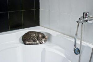 cat-1052060_960_720
